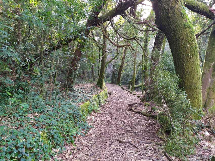 El Bosque Encantado de Aldán