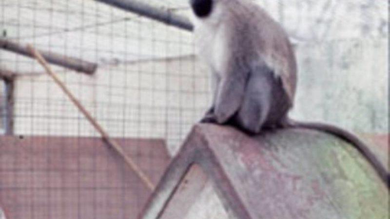 El mono Paco