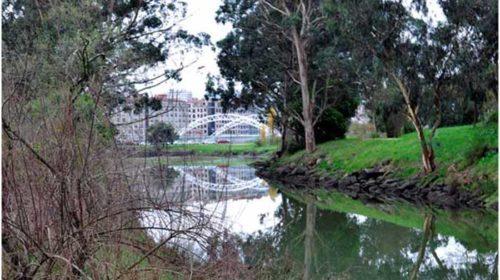 A Xunqueira da Gándara do Alba: Un paraíso natural na cidade de Pontevedra