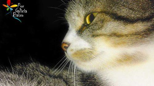 Mi lindo gatito