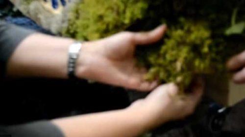 Vídeo de la elaboración de los Mayos y la propia fiesta de los Mayos en Ourense