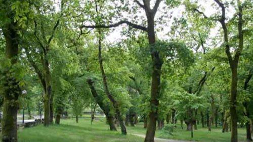 O Parque – Xardín Botánico e Carballeira de Caldas de Reis