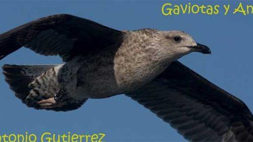 Quieres seguir a los pájaros que visitan Galicia?