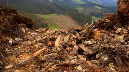 Se presentan 40 denuncias por daños al patrimonio hechos por la industria del eucalipto