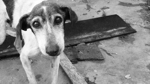 La Concejalía de Medio Ambiente registra cerca de 300 avisos de animales abandonados durante el 2018. Sanxenxo